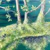 Doubs, Wasser, Moos, Malerei