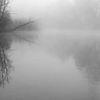 Nebel, Wald, Wasser, Fotografie