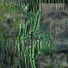 Sumpf, Outsider art, Moor, Wald