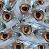 Effekt, Fisch, Makrele, Mackereel