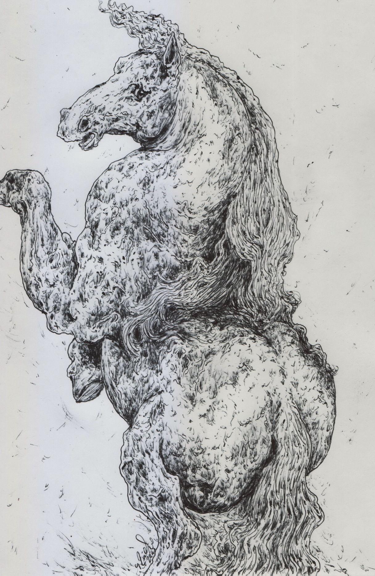Bild: Pferd, Anatomie, Tiere, Illustrationen von Ganglion bei KunstNet