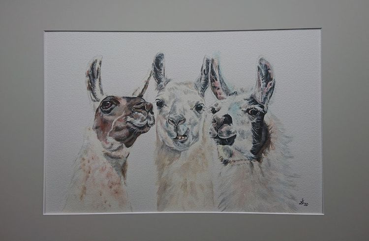 Portrait, Lama, Alpaka, Tiere, Malerei