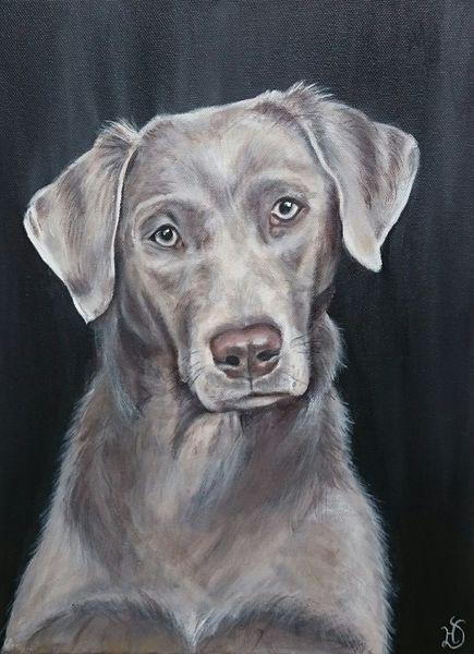 Labrador, Hund, Portrait, Malerei