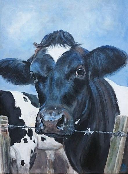 Landleben, Kuh, Stacheldraht, Kalb, Schwarz weiß, Holsteiner