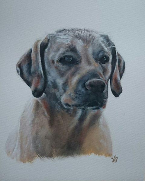 Labrador, Hund, Portrait, Schatten, Malerei, Auftrag