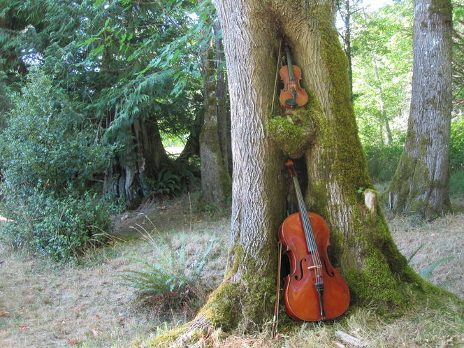 Musik, Instrument, Musikinstument, Cello, Geige, Violine