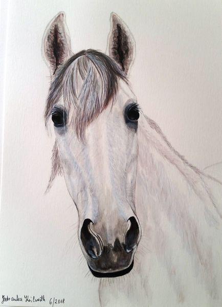 Stute, Rosa, Pferde, Zeichnungen