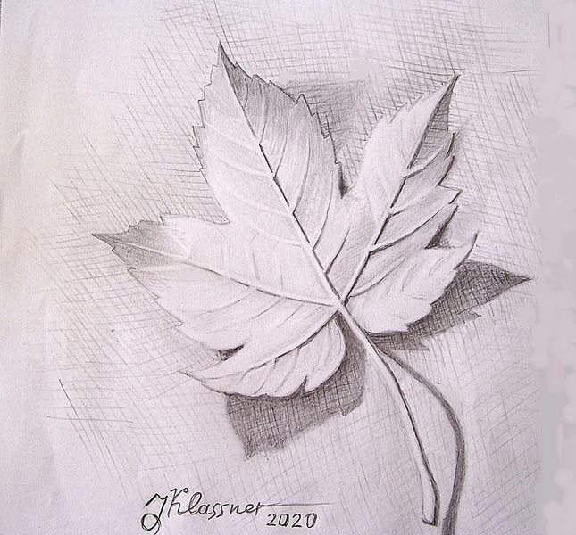 Herbst, Blätter, Natur, Zeichnungen, Ahorn