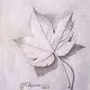 Blätter, Natur, Herbst, Zeichnungen