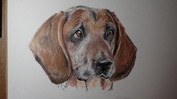 Hund, Bracke, Zeichnung, Zeichnungen