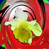 Gelbe lilie, Digitale kunst