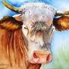 Kuh, Horn, Braun, Natur