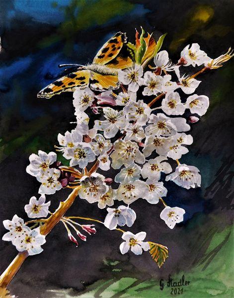 Aquarellmalerei, Natur, Kontrast, Schönheit, Apfelblüten, Sonne