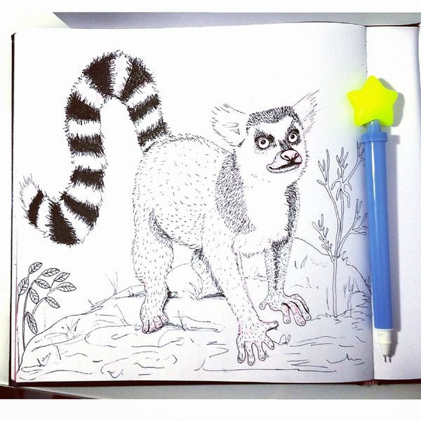 Affe, Tiere, Skizzenbuch, Lemur, Illustrationen,