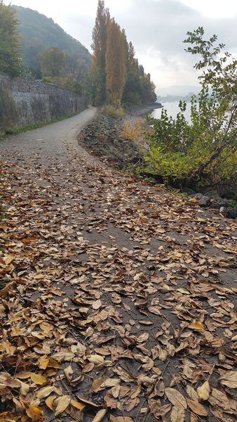 Weg, Herbst, Laub, Idylle, Rhein, Fotografie