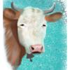 Weiß, Kuh, Tiere, Digital