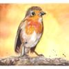 Vogel, Skizzenbuchübung, Rotkehlchen, Aquarell