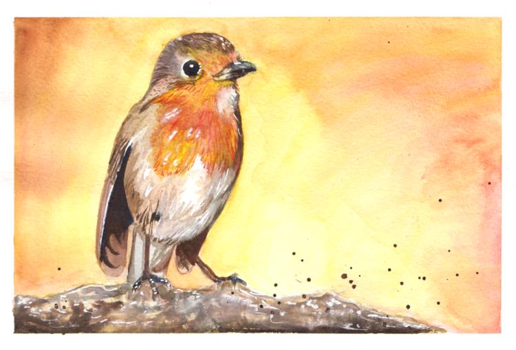 Rotkehlchen, Vogel, Skizzenbuchübung, Aquarell