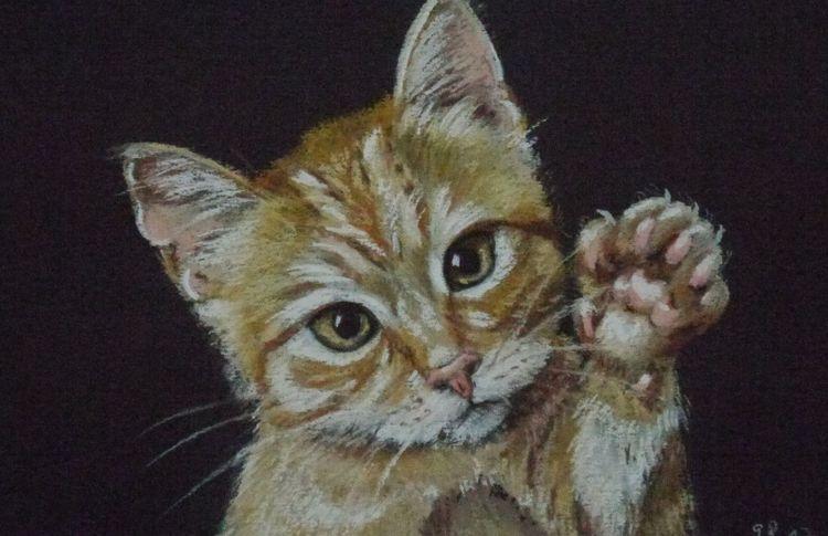 Hebt pfötchen, Katze, Pastellstifte gemalt, Malerei