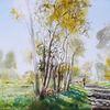 Birken, Weg, Baum, Schatten