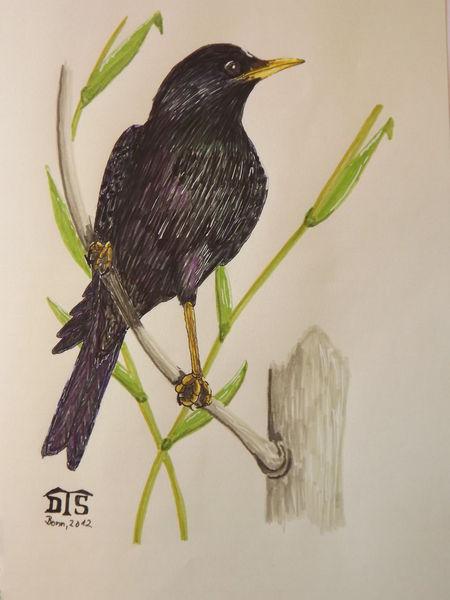 Vogel, Stern, Singvogel, Zeichnungen,