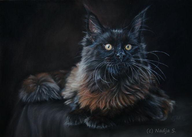 Realismus, Maine coon, Portrait, Katze, Pastellmalerei, Zeichnungen