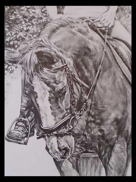 Bleistiftzeichnung, Sport, Porträtmalerei, Pferde, Pferdemalerei, Zeichnung