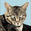 Katze, Augen, Illustrationen,