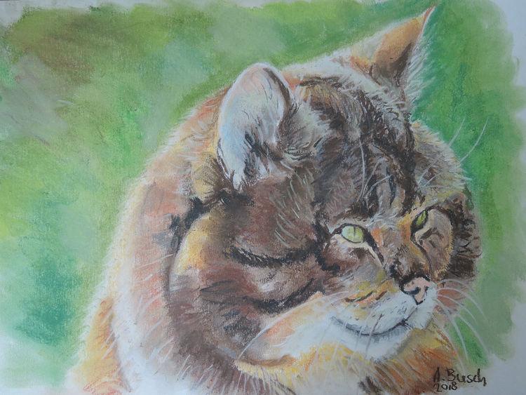 Kater, Wildkatze, Tierportrait, Zeichnungen,