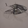 Gegenständlich, Bleistiftzeichnung, Glanz, Zeichnung