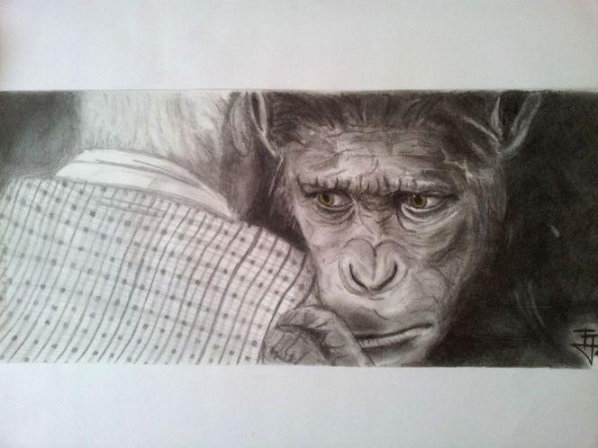 Portrait, Planet der affen, Trauer, Affe, Verzweiflung, Bleistiftzeichnung