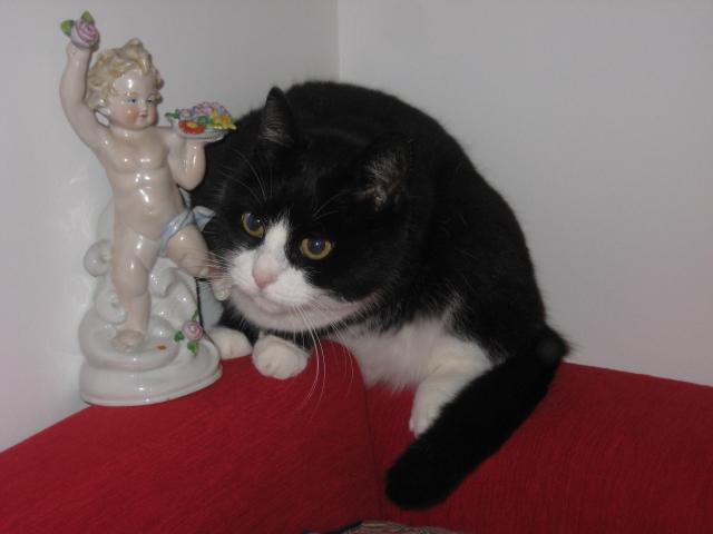 Katze, Haustier, Lucie, Fotografie, Tiere