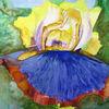 Iris, Frühling, Aquarellmalerei, Blüte