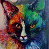 Tiere, Kater, Regenbogen, Blickfang