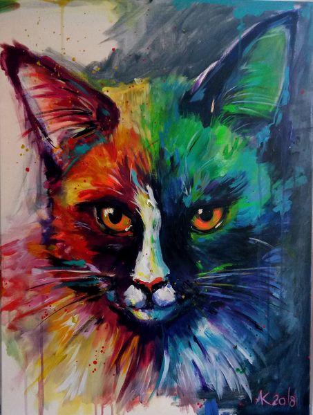 Katze, Mainecoon, Einkaufen, Neonfarben, Heim, Haustier