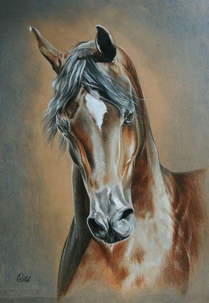 Vollblut, Braun, Zeichnung, Tiere, Pferde, Araber