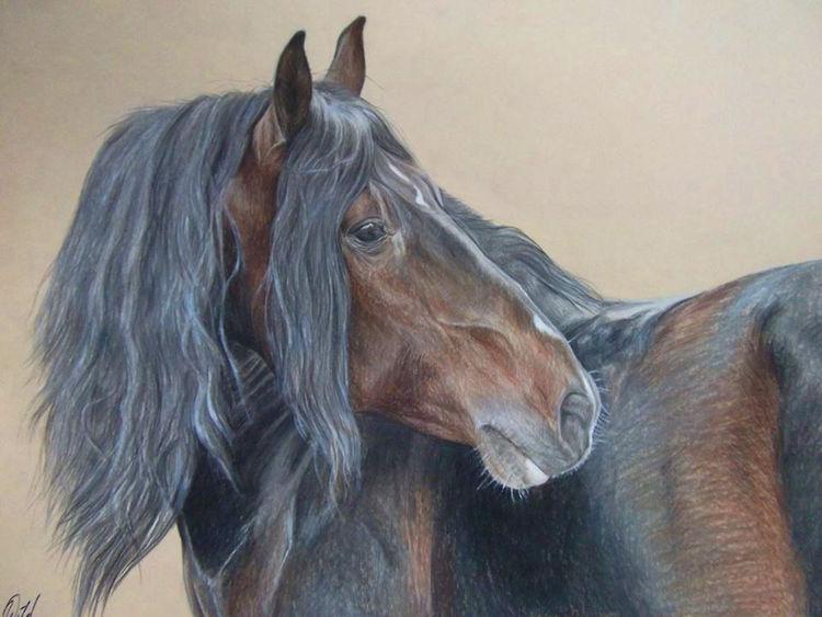 Haustier, Spanier, Rappe, Pferde, Braun, Andalusier