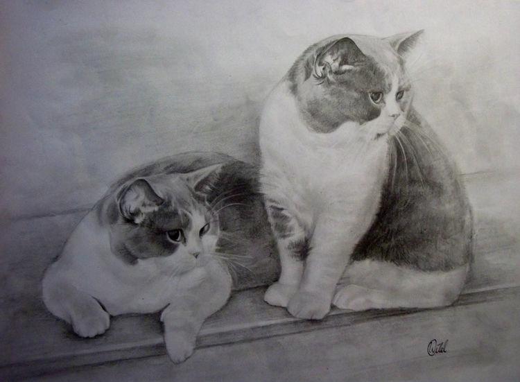 Katze, Tiere, Haustier, Grau, Zeichnungen