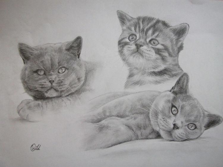 Katze, Haustier, Tiere, Collage, Zeichnungen