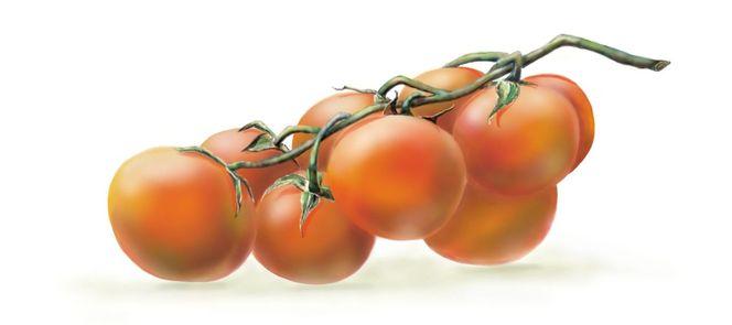 Tomate, Digital, Grafik, Gemüse, Digitale kunst