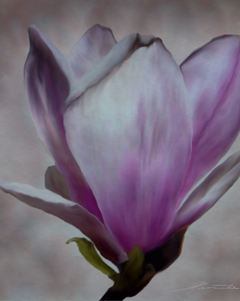 Magnolien, Digitale kunst, Malerei