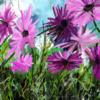 Sommer, Moment, Blumen, Digital