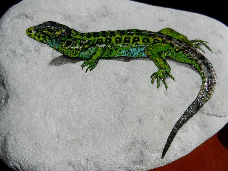 Zauneidechse, Reptil, Stein, Echse, Malerei