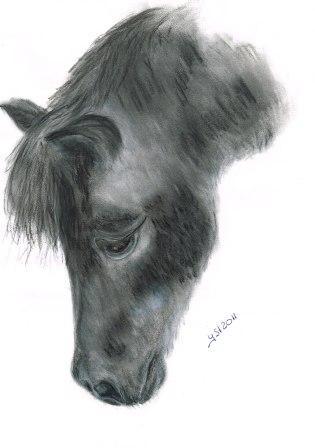 Tiere, Zeichnung, Pferde, Pony, Natur, Tierportrait