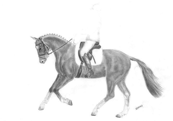 Tiere, Pferde, Bewegung, Grafit, Tierportrait, Zeichnung