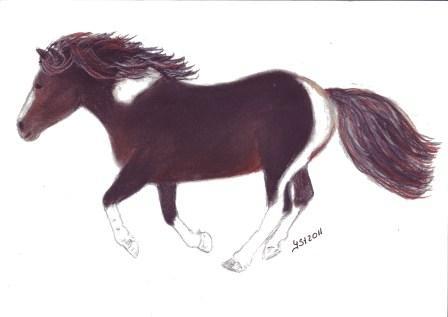 Porträtmalerei, Pferdeportrait, Pferdezeichnung, Pony, In bewegung, Pastellmalerei
