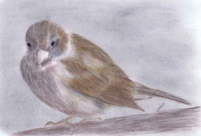 Spatz, Vogel, Natur, Tiere, Zeichnungen