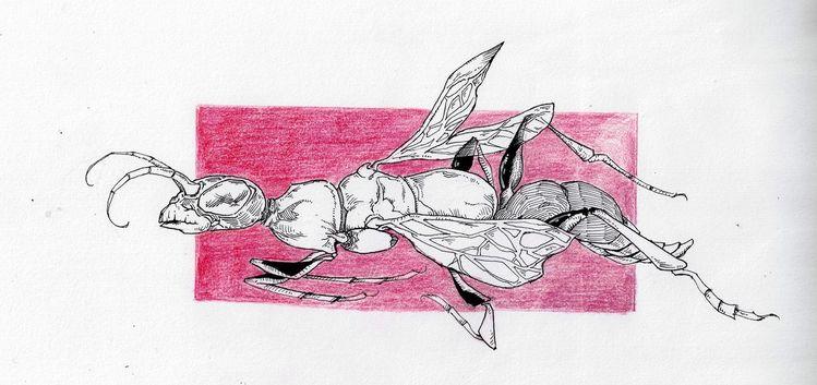 Zeichnungen, Wespe