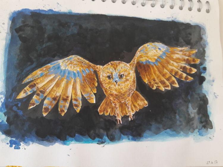 Fliegen, Nacht, Eule, Aquarell, Skizze