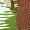 Farben, Teich, Licht, See